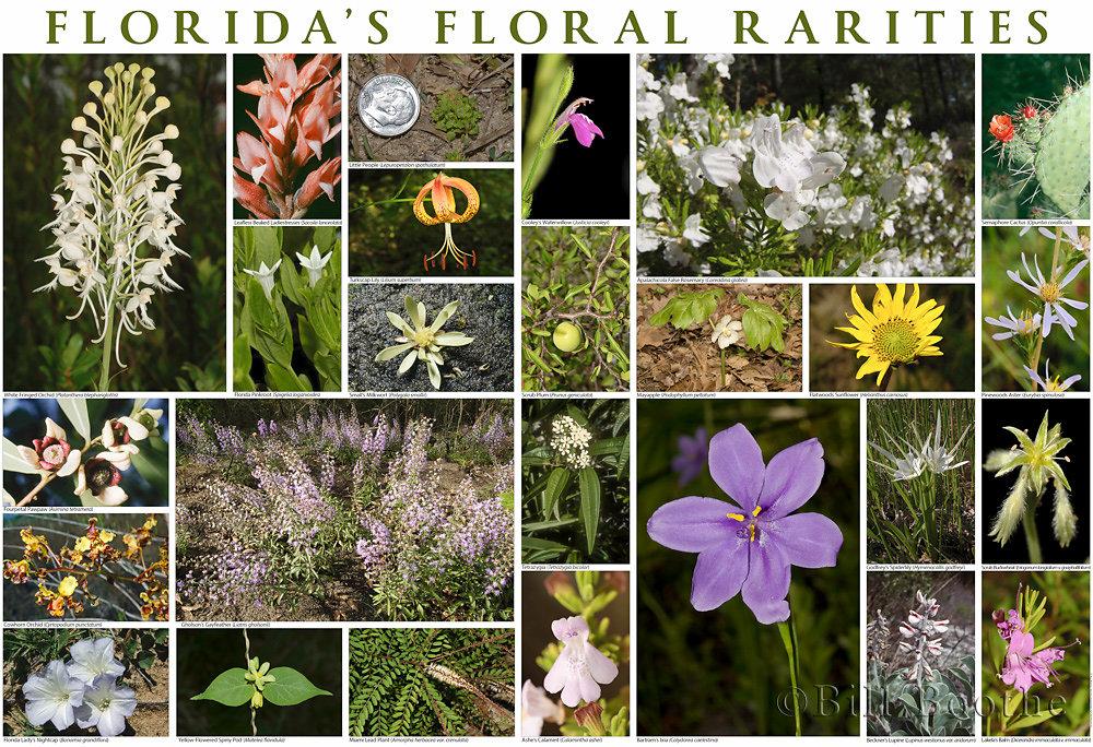 Florida's Floral Rarities